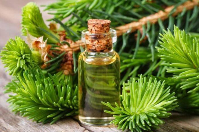 Использование пихтового масла для лица и не только