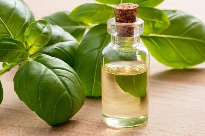 Применение в косметологии эфирного масла базилика