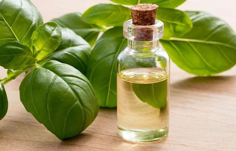 Эфирное масло базилика для лица
